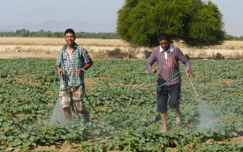 TN-–-Intensive-agricultural-development-in-the-Kairouan-plain-1
