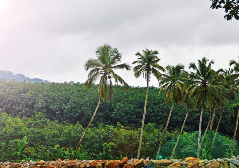 Para os próximos dias, as áreas mais ao norte do Ceará serão mais beneficiadas (FOTO: Reprodução)