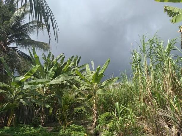 Em áreas do litoral, a chuva chegou logo nas primeiras horas da manhã de hoje (FOTO: Renan Nascimento)