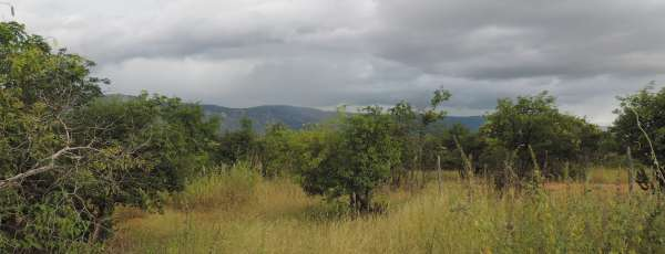Área foi tomada pela vegetação nativa após ações da Funceme (FOTO: Divulgação/Funceme)