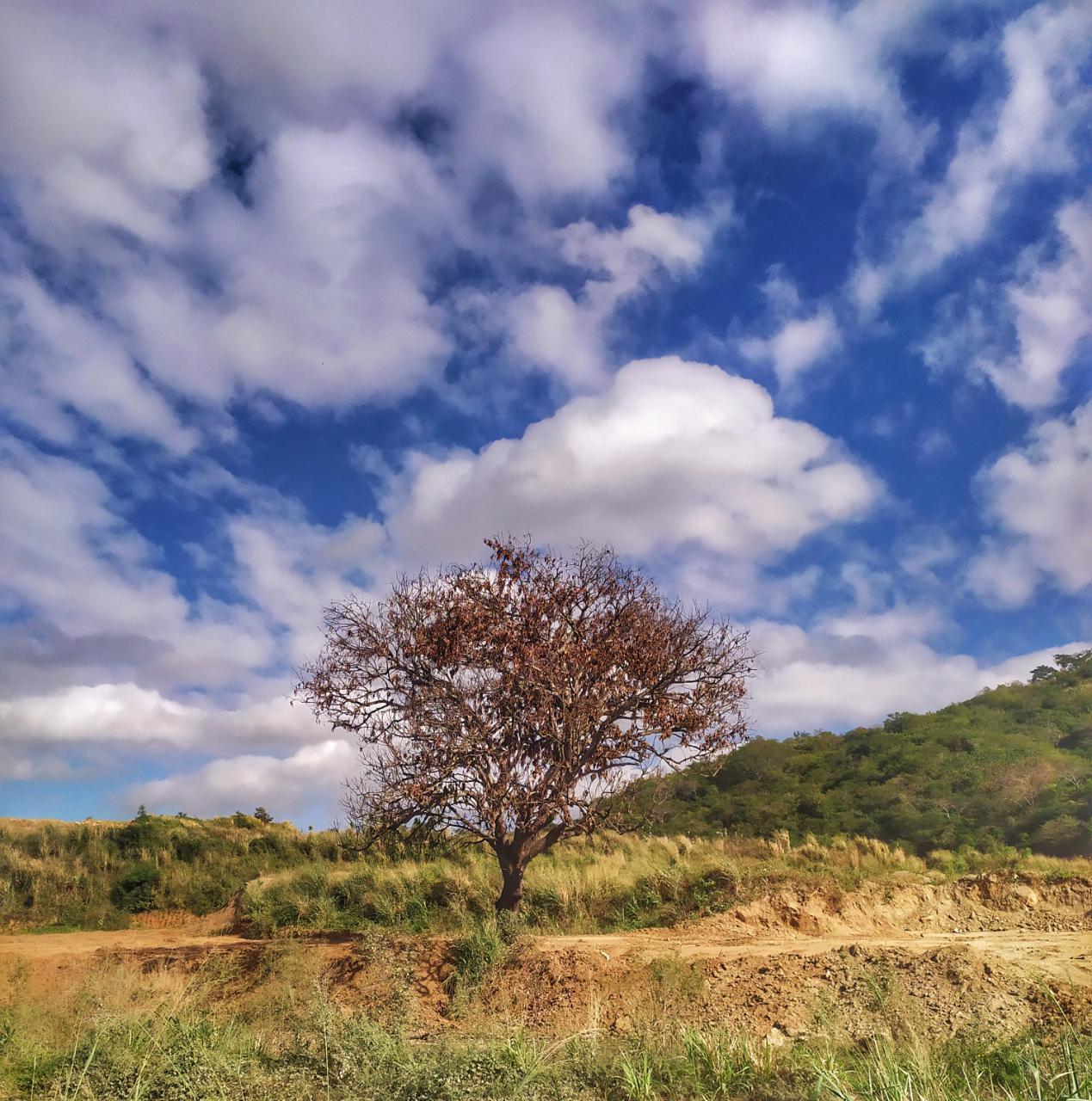 Apesar da grande presença de nuvens, não há, neste momento, expectativa de chuvas (FOTO: Halisson Oliveira)