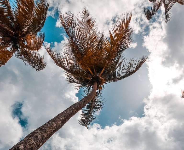 Rajadas acima dos 50 km/h podem mover árvores grandes e causar ondas de até de alturas mais elevadas (FOTO: Reprodução/Pexels)
