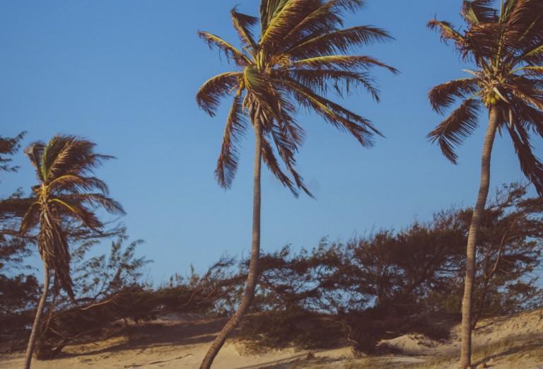 Neste período do ano, é comum um aumento na velocidade dos ventos (FOTO:Pexels/Reprodução)