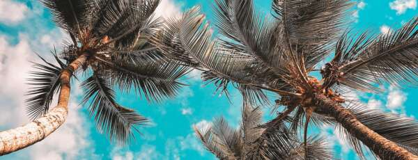Estado apresenta poucas nuvens e chances reduzidas de chuva (FOTO: Reprodução/Pexels)