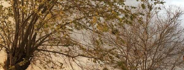 Interior deve apresentar registros de chuva passageira (FOTO: Nicolly Leite)